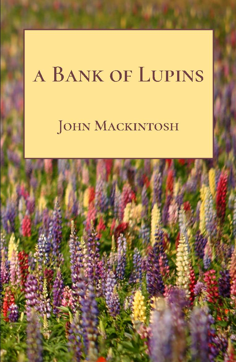 A Bank of Lupins by John Mackintosh